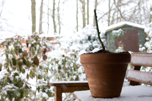 growing plants in winter time