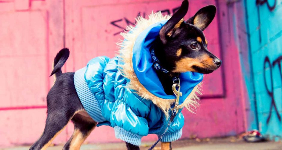 should we dress our pet