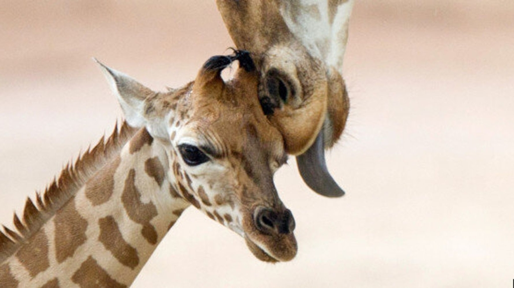 animals bond