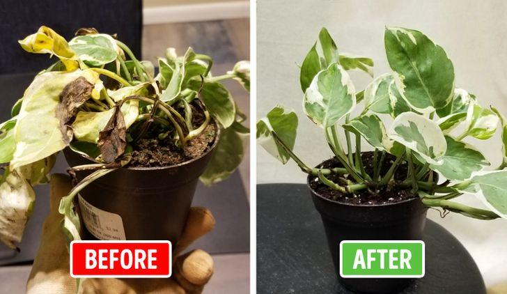 save death plant